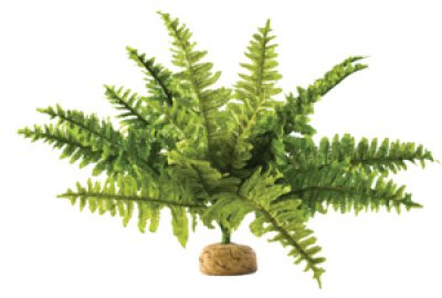 Exo Terra - Boston Fern