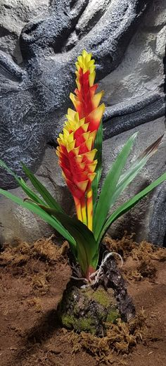 Lucky Reptile - Bromelia yellow