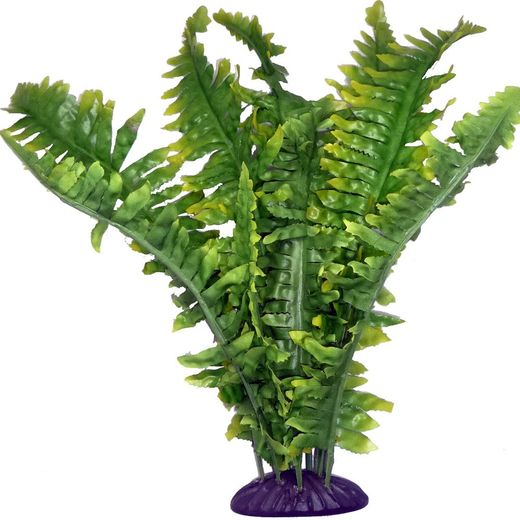 Komodo - Boston Fern